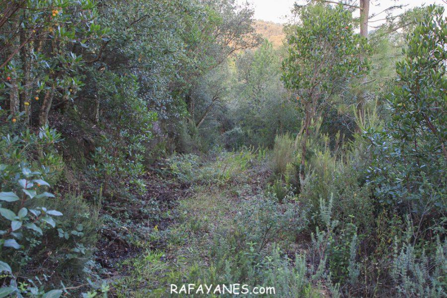 Ruta: Argimon (465 m) (Els 100 Cims)