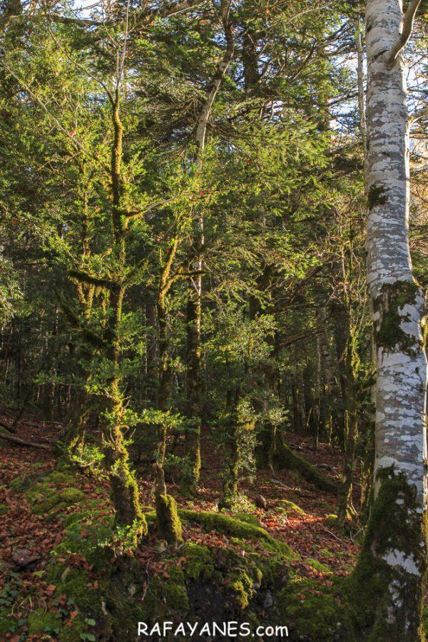 El Otoño en la Cola de Caballo (Parque Nacional de Ordesa- Monte Perdido)