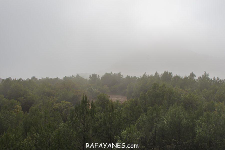 Ruta: Turó de la Torre o de Castellnou (824 m) (Els 100 Cims)