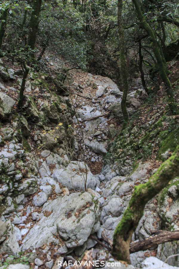 Ruta: Puig de Bassegoda (1.373 m) (Els 100 Cims)