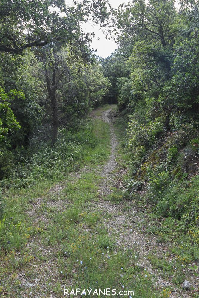 Ruta: Sant Sadurní de Gallifa ( 942 m.) (Els 100 Cims)