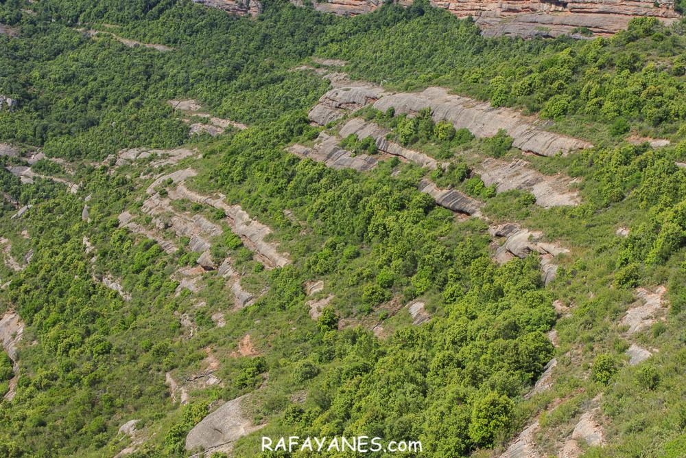 Ruta: Roca Sereny ( 804 m.) (Els 100 Cims)