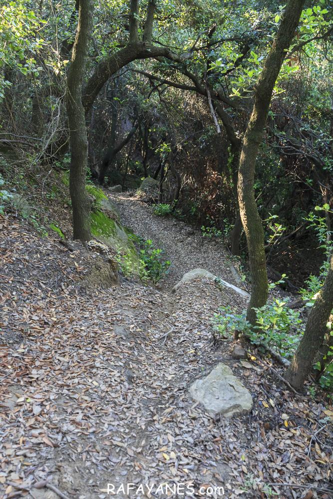 Ruta: Sant Patllarí ( 646 m.) (Els 100 Cims)