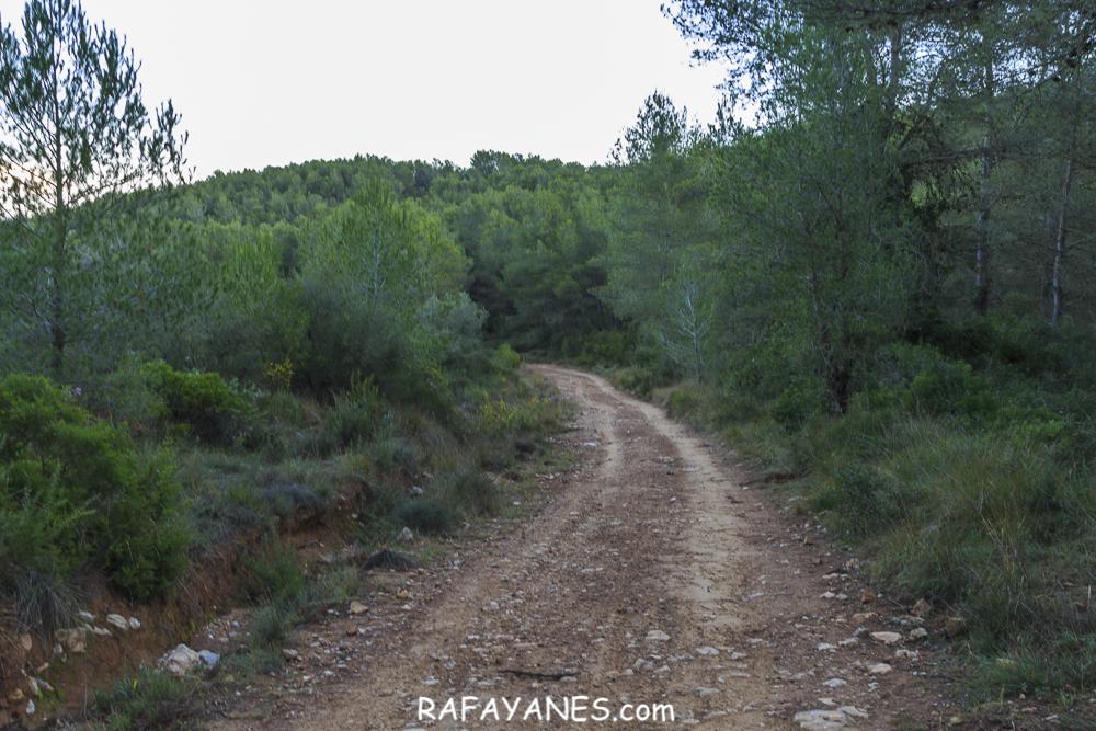 Ruta: Puig de l'Àliga (464 m.) (Els 100 Cims)