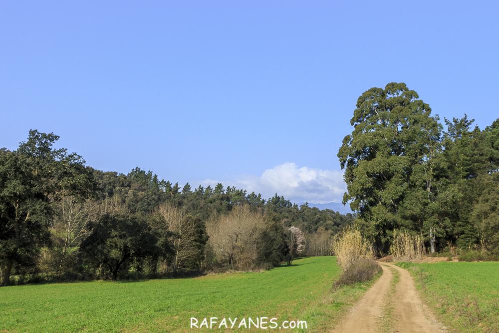 Ruta: Valle d'Olzinelles – Pozo de hielo Can Draper – Forns de Pega – Sant Esteve d'Olzinelles (El Montnegre y El Corredor)