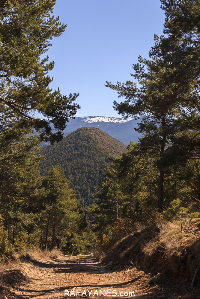vRuta: Roc de Galliner (1.630 m.) (Els 100 Cims)
