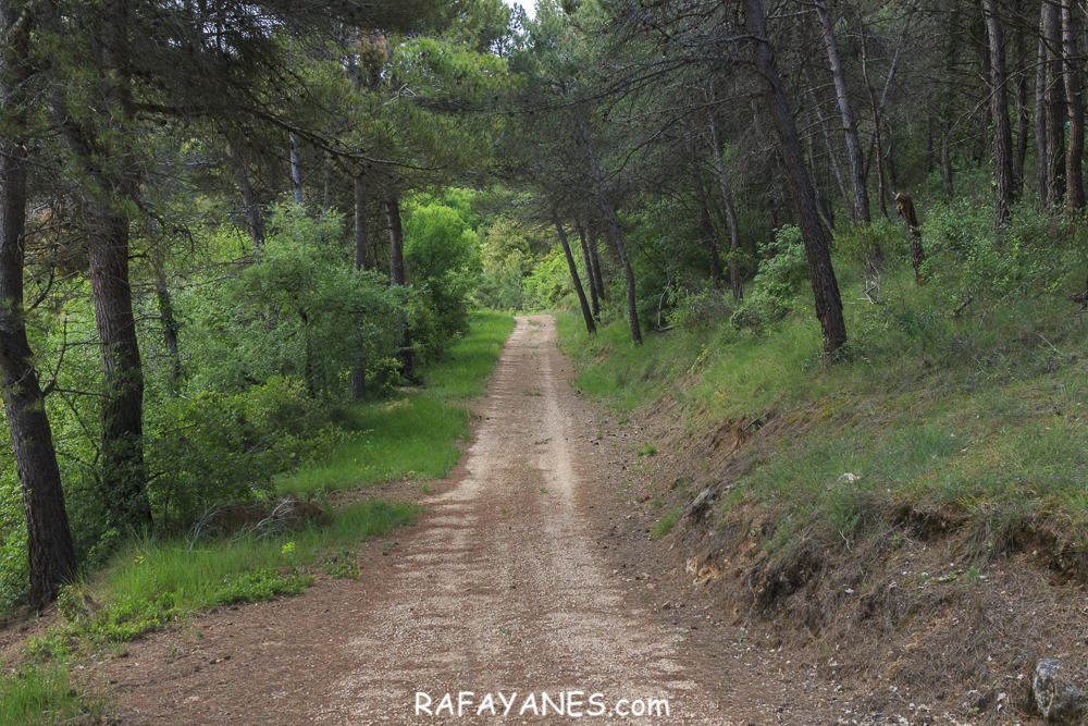 Ruta: Tossal Gros de Vallbona (803 m.) (Els 100 Cims)
